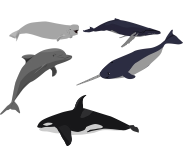 Sea Mammals Sample